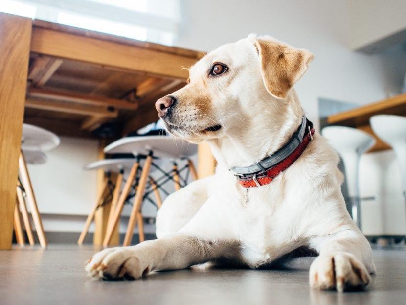 Cách khử mùi nước tiểu của động vật trên thảm và sàn nhà hiệu quả